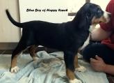 Blue boy 11 weeks old3