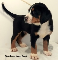 Blue Boy 8 weeks_1