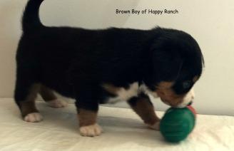 Brown boy 4 weeks_3