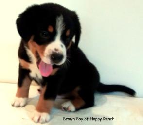 Brown Boy 6 weeks_6