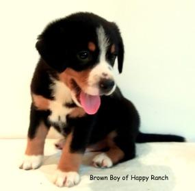 Brown Boy 6 weeks_8