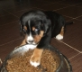 Bruno of Happy Ranch