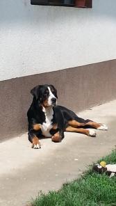 Carmen 18 months