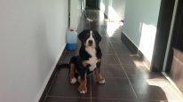 Carmen - 3 months