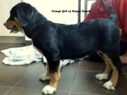 Orange Girl 11 weeks7