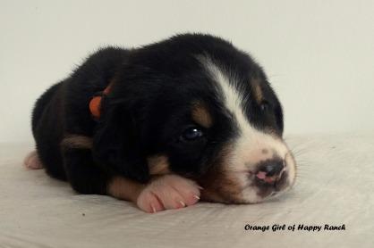 orange-girl-4-weeks