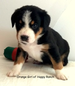 Orange girl 4 weeks_4