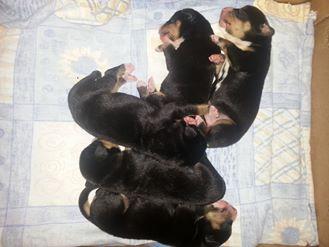puppies 2 days
