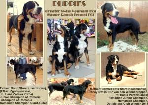 Puppies Carmen si Derek