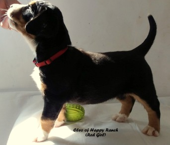 red-girl-6-weeks_2