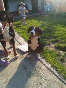 Sasha, Bella si Theo