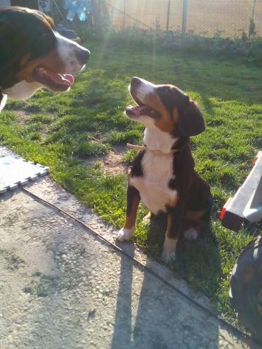 Sasha si Bella