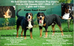 GSS Puppies
