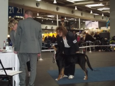 Bella at Hannover 2014