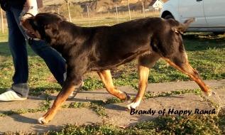 Brandy 18 month - movement