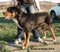 Brandy 18 months