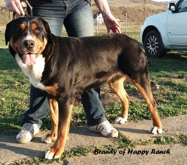 Brandy 18 months3
