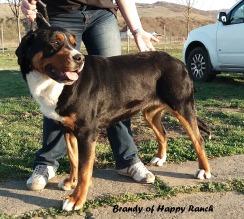 Brandy 18 months_2