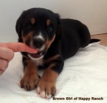 Brown Girl 6 weeks (4)