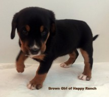 Brown Girl 6 weeks