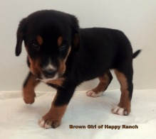 Brown Girl 6 weeks