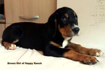 Brown girl 10 weeks (3)