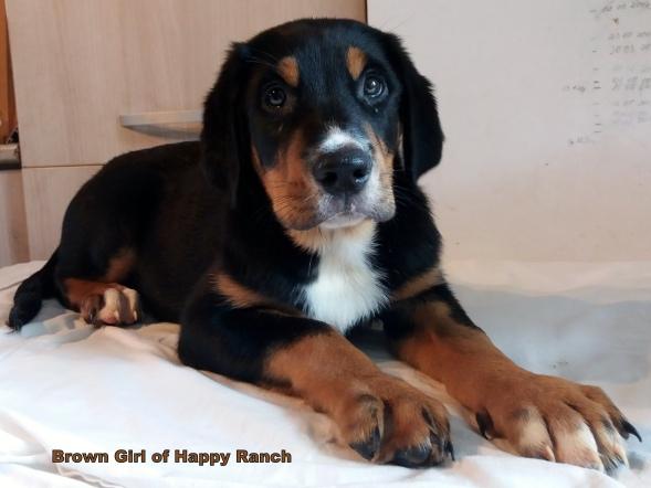 Brown girl 10 weeks